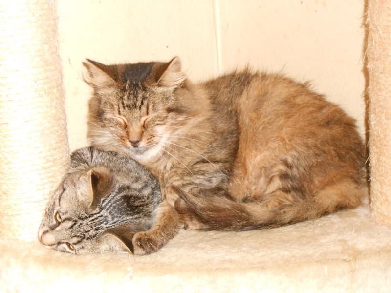 IRMA chaton femelle 10/06/2013 adoptée par jennifer  ( 85 ) Dscn0013