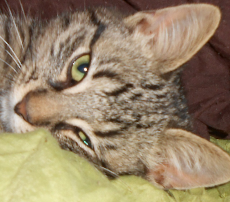 IRMA chaton femelle 10/06/2013 adoptée par jennifer  ( 85 ) Dscn0111