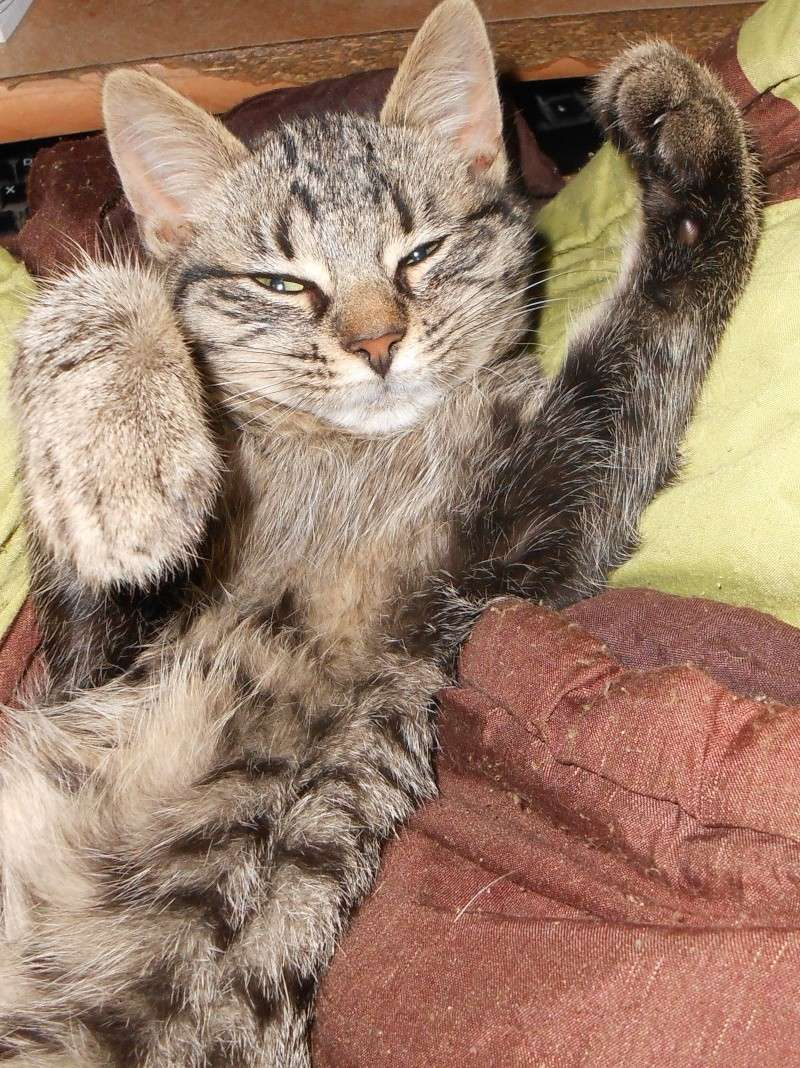 IRMA chaton femelle 10/06/2013 adoptée par jennifer  ( 85 ) Dscn0112
