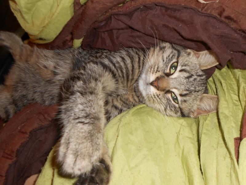 IRMA chaton femelle 10/06/2013 adoptée par jennifer  ( 85 ) Dscn0113