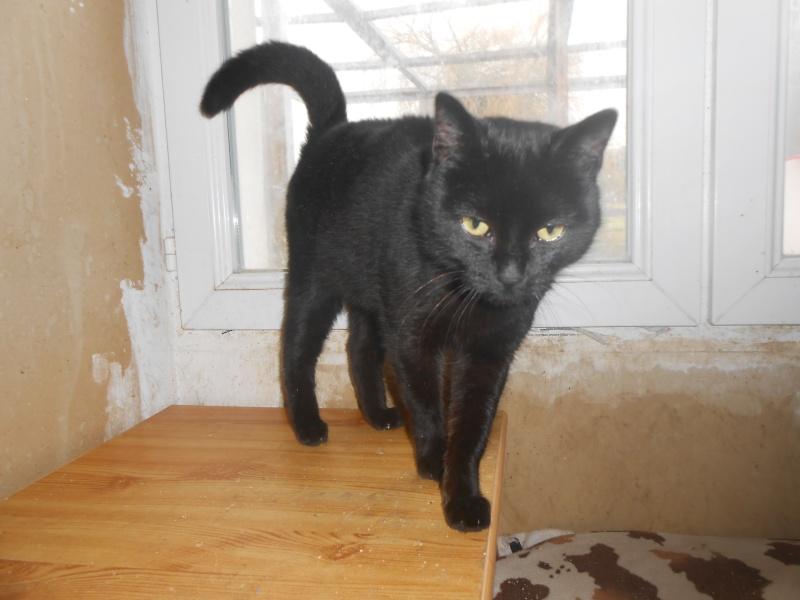 KOVOU  chat  noir né janvier 2013 adopté par JULIE ( 86 ) Dscn3110