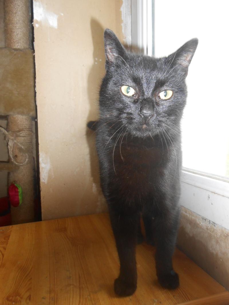 KOVOU  chat  noir né janvier 2013 adopté par JULIE ( 86 ) Dscn3112