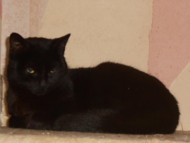 KOVOU  chat  noir né janvier 2013 adopté par JULIE ( 86 ) Dscn3317