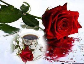 Bonjour tout le monde - Page 20 16255110