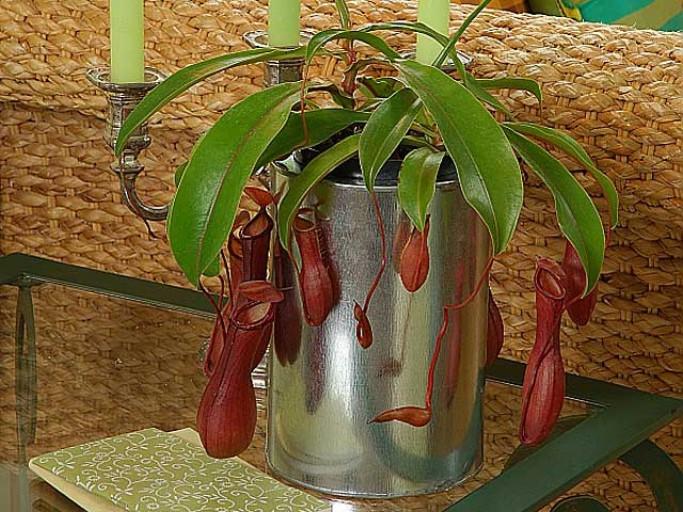 animal pour terrarium planter ? Carniv10