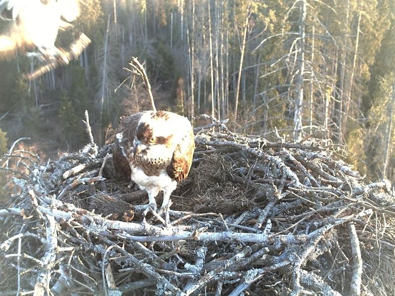 Ilmar's Nest - Page 16 2014-133