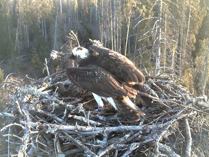 Ilmar's Nest - Page 16 2014-136
