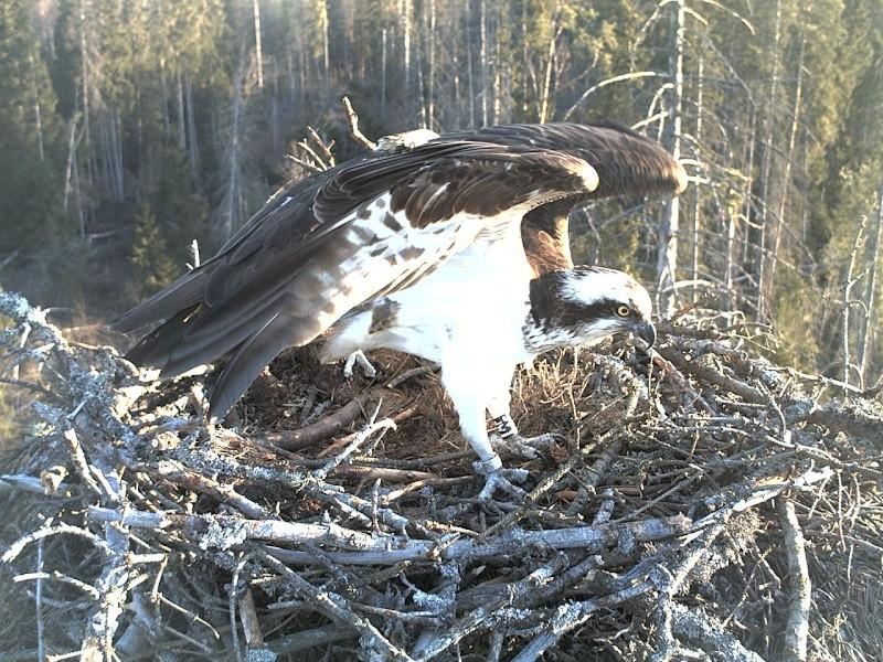 Ilmar's Nest - Page 16 2014-140