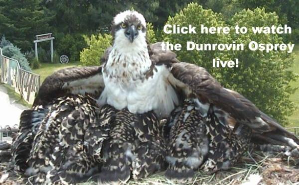 Dunrovin Ospreys - Page 24 2014du10
