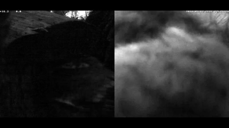 Estonian Tawny Owl Webcam 2014 Cghdde12