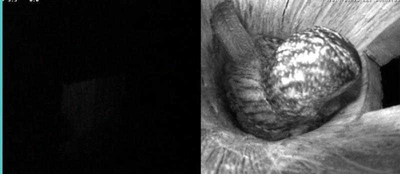 Estonian Tawny Owl Webcam 2014 - Page 2 Oeeeee10