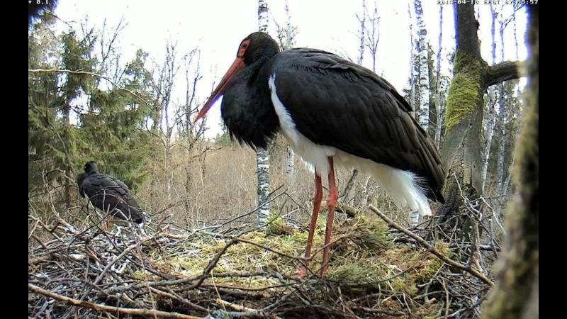 Black Stork ~ Tiit & Tiina ~ 2013 - Page 14 Onnnnn14