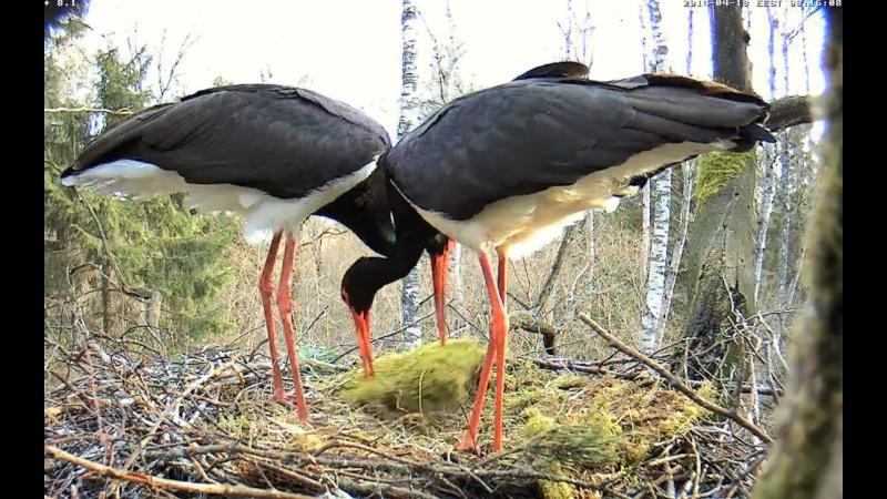 Black Stork ~ Tiit & Tiina ~ 2013 - Page 14 Onnnnn20