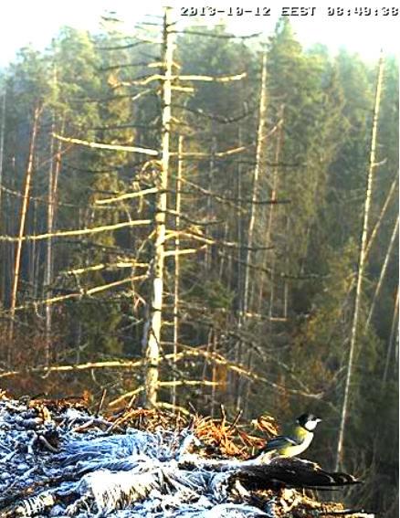 Ilmar's Nest - Page 41 Sssaaa16
