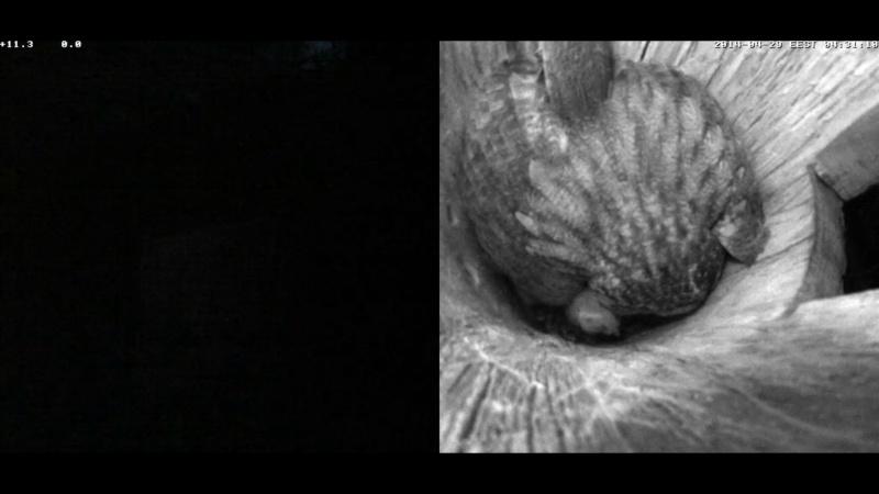 Estonian Tawny Owl Webcam 2014 - Page 40 Wxaaaa12