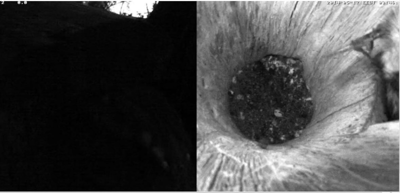 Estonian Tawny Owl Webcam 2014 - Page 24 Z510