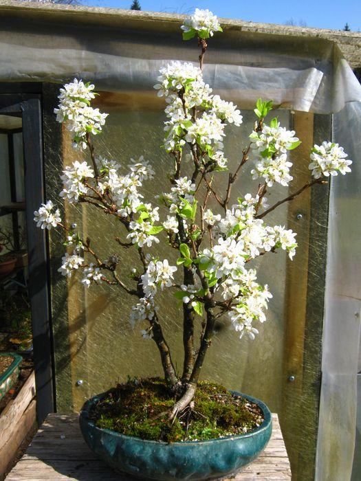 prime fioriture stagionali - Pagina 2 Immagi29