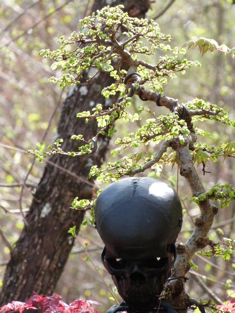 je fais des trous ...et je mets des arbres dedans - Page 4 P1180423