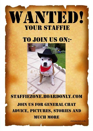 Staffordshire Bull Terrier Chat and Learn Forum - Front Alfie10