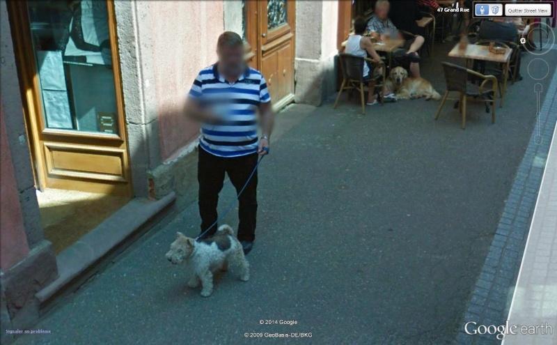 STREET VIEW:les chiens domestiques dans les cours ou en laisse dans les rues !  Milou10
