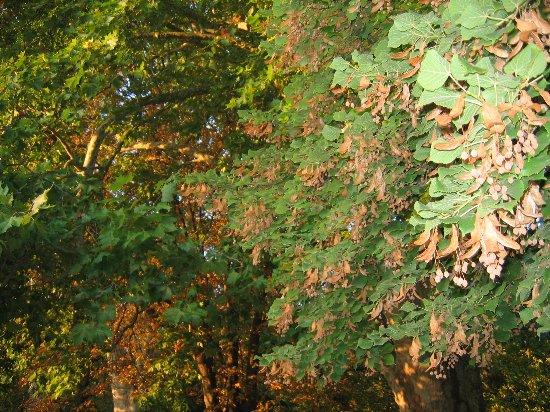 Les platanes et autres arbres vénérables chez Claire 002110
