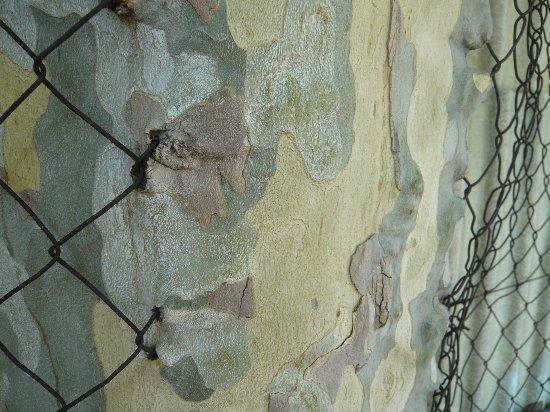 Les platanes et autres arbres vénérables chez Claire Ardach10