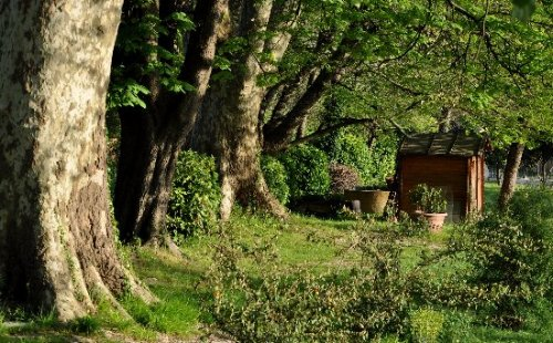 Les platanes et autres arbres vénérables chez Claire Dabut_10