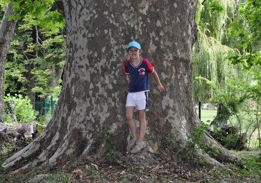 Les platanes et autres arbres vénérables chez Claire Dsc_0110