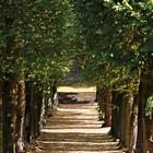 Les platanes et autres arbres vénérables chez Claire Fa639810
