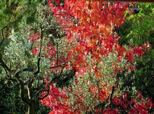 Concours: Les plantes nous en font voir de toutes les couleurs. Participations (photo normale) - Page 2 Liquid11