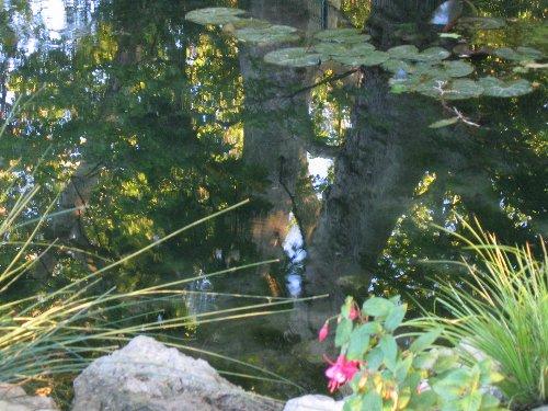 Les platanes et autres arbres vénérables chez Claire Nature13