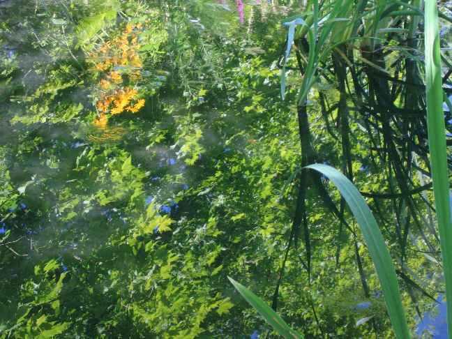 Les platanes et autres arbres vénérables chez Claire Nature15