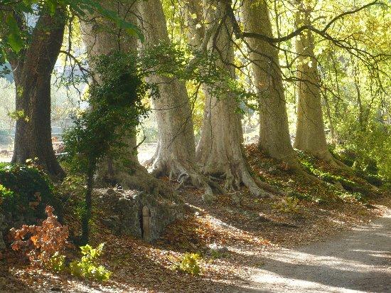 Les platanes et autres arbres vénérables chez Claire Octobr11