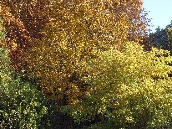 Les platanes et autres arbres vénérables chez Claire Octobr14