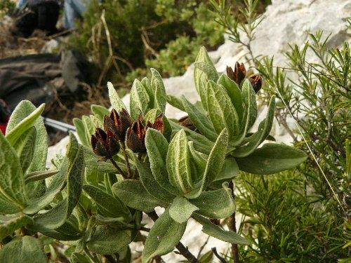 Les calanques - paysages et flore P1280918