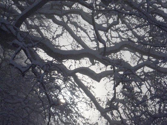 Les platanes et autres arbres vénérables chez Claire Rimg0111