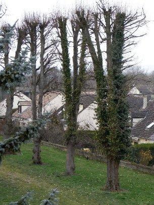 Les platanes et autres arbres vénérables chez Claire Rimg0910