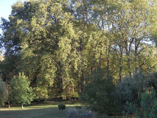 Les platanes et autres arbres vénérables chez Claire Rimg6710