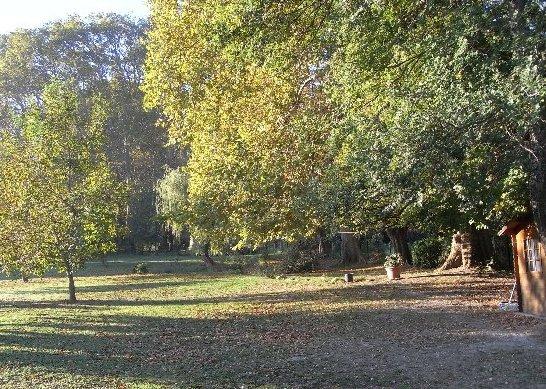 Les platanes et autres arbres vénérables chez Claire Septem10