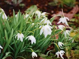 un buisson en fleurs Images64