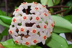 un buisson en fleurs Talach10