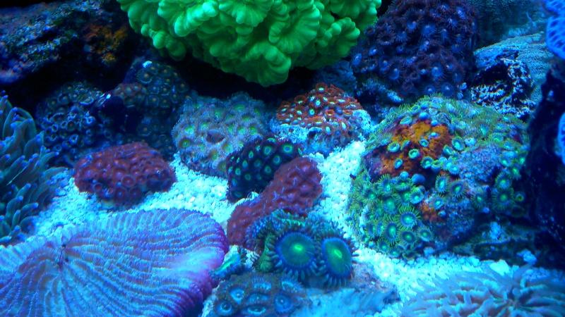 karlito's reef 2 - Page 15 Dsc_0934