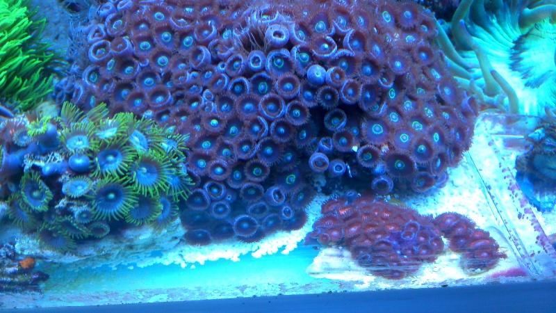 karlito's reef 2 - Page 15 Dsc_0935