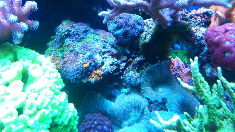 karlito's reef 2 - Page 15 Dsc_0937