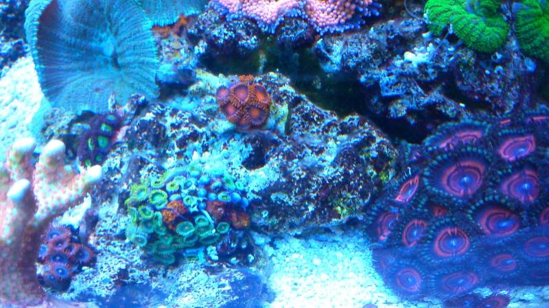 karlito's reef 2 - Page 15 Dsc_0940