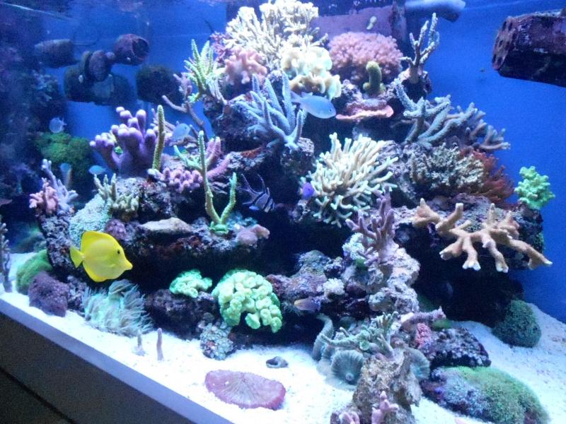 karlito's reef 2 - Page 6 Dscn2217