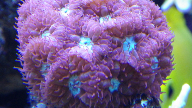 polypes du karlito Imgp1816