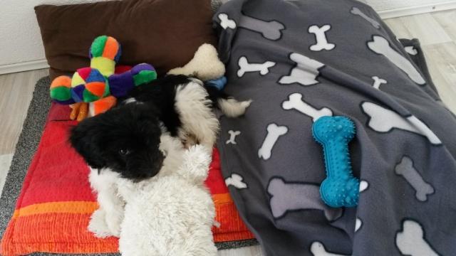 Photos du coin dodo et repas de vos chiens 20140518