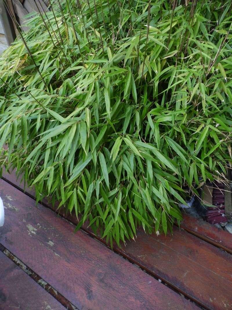 Qui ya t'il dans mon jardin de bon pour mes todons? Help besoin d'aide pour reconnaitre les plantes Sam_1424