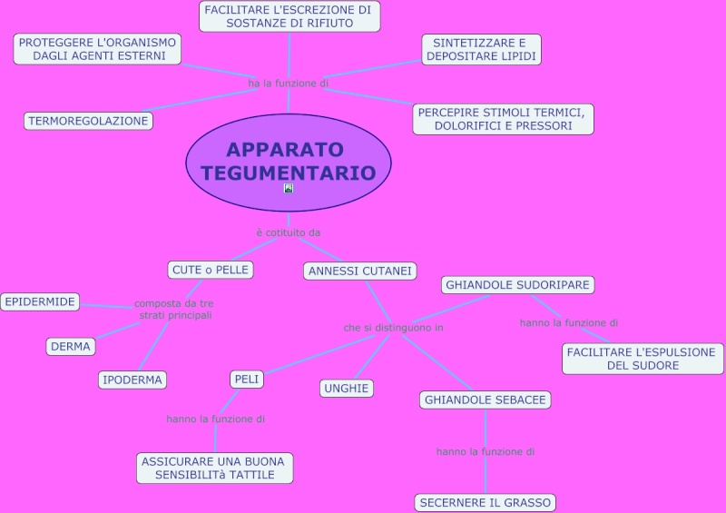 IL CORPO UMANO E I SUOI APPARATI, classe I e V - Pagina 2 Appara10